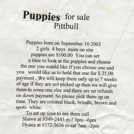 puppies-for-sale-pittbull.jpg